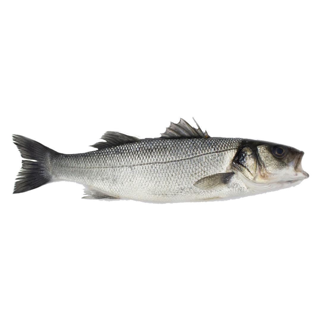 Levrek Balığı (Deniz Nimeti)